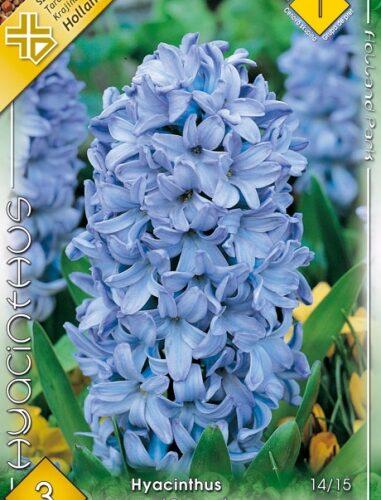 jácint delft blue