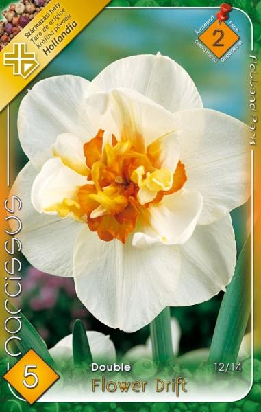 nárcisz flower drift