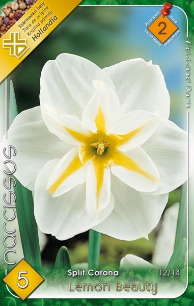 nárcisz lemon beauty