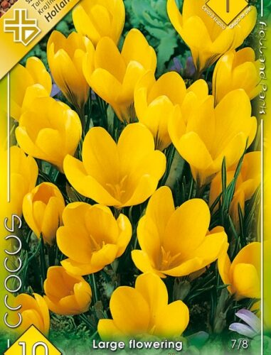 Crocus vernus Large Yellow