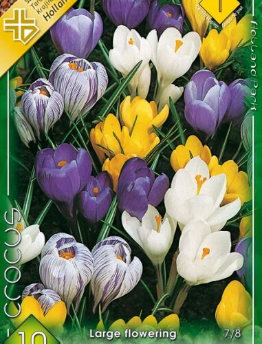 Crocus vernus mix