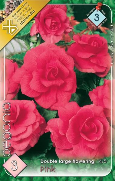 Nagyvirágú gumós begónia pink