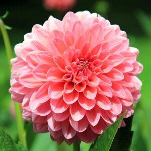 Tavaszi virághagymák