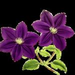 Moka Kert Webshop Logo